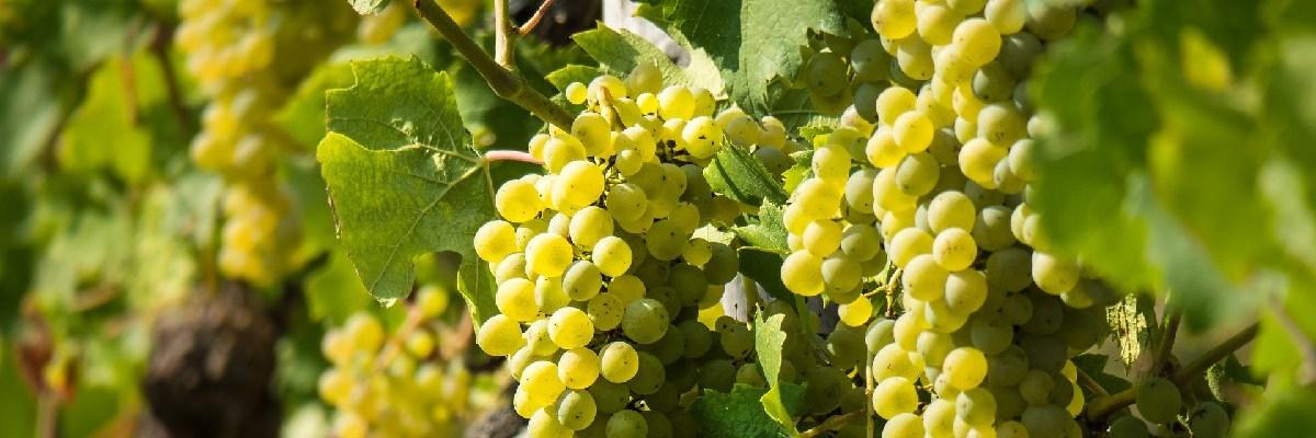 Avis vin Pouilly-fuissé Bourgogne