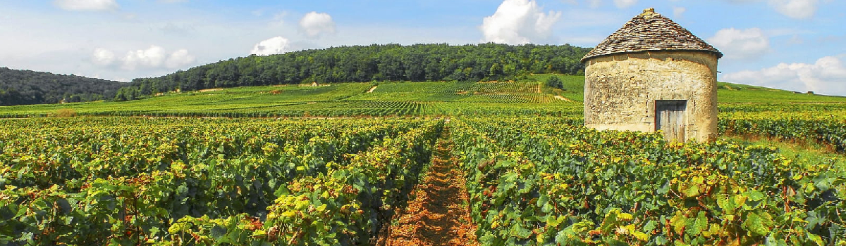 Avis vin blanc sec petit chablis Bourgogne