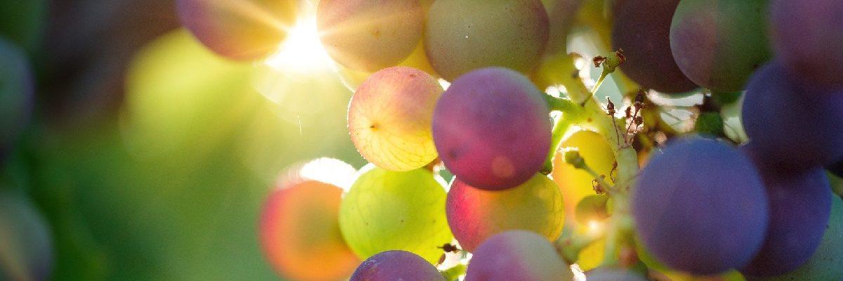 avis vin Noémie Chanteloup